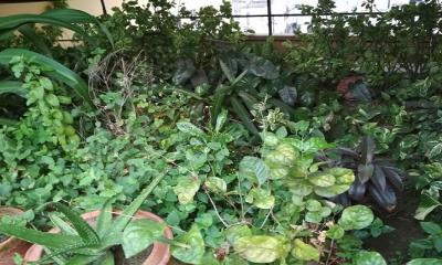 করোনা স্বস্তি এনেছে প্রাণ প্রকৃতিতে