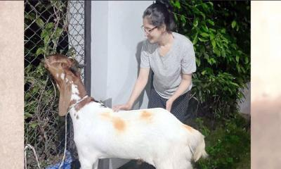 কোরবানি দিলেন বিদ্যা সিনহা মিম!