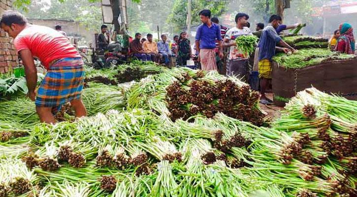 কুমিল্লার কচু ও কচুর লতি রপ্তানি হচ্ছে ২৫ দেশে