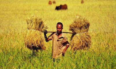 চলতি বছরে বাংলাদেশের প্রবৃদ্ধি হবে ৫.১ শতাংশ