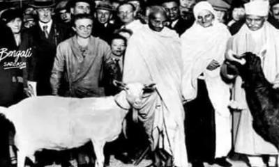 গান্ধী কেন নোয়াখালী এসেছিলেন ?  কেনইবা ছাগল হারিয়েছেন ?