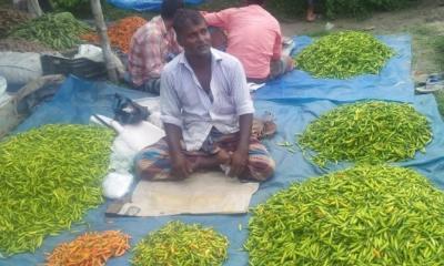 দুপচাঁচিয়ায় কাঁচামরিচের দাম কেজি প্রতি ১০০ টাকা বৃদ্ধি