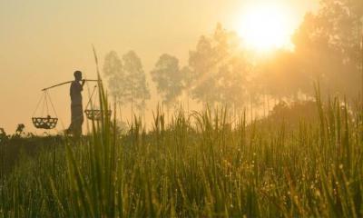 হেমন্তের আবাহনে কার্তিকের সূচনা
