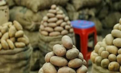 কেজিতে ১০ টাকা কমল আলুর দাম