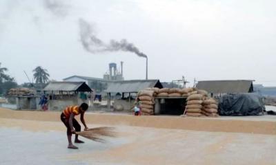 খাজানগরে শতাধিক রাইচ মিলের ছাই পরিবেশ ও কৃষি জমি নষ্ট হচ্ছে