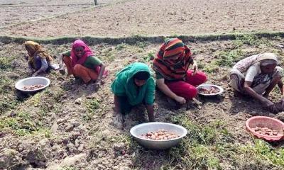 দুপচাঁচিয়ায় বন্ধ হয়নি শিশুশ্রম: নারীদের শ্রমে মজুরী বৈষম্য