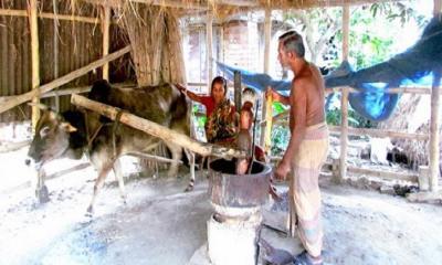 বিলুপ্তির পথে কলু সম্প্রদায়, বদলাচ্ছে  পেশা