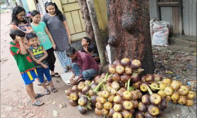 গরমের স্বস্থি তাল শাঁস গৌরীপুরে বিক্রির ধুম