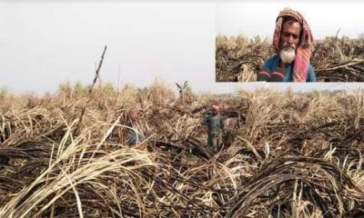 কৃষকের চোখের সামনে ২ একর জমির আখ পুড়ে ছাই