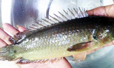 কই মাছ গলায় আটকে যুবকের মৃত্যু