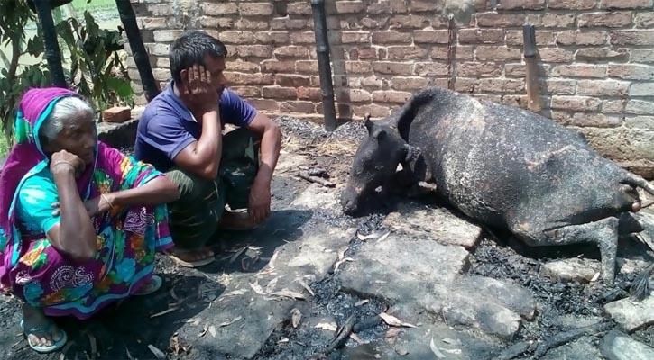 পীরগঞ্জে অগ্নিকান্ডে কৃষকের ঘর পুড়ে ছাই