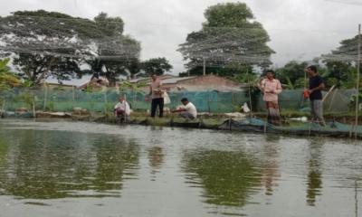 প্রশিক্ষণ ছাড়াই আধুনিক প্রযুক্তির মাধ্যমে তিন বন্ধুর শিং মাছ চাষ